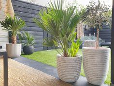 Deco, Garden Inspiration, Backyard, House Design, Plants, Courtyards, Patio, Decor, Backyards