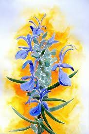 pintura con flor del romero -
