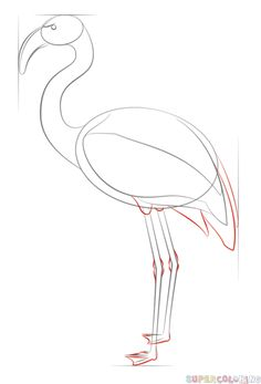How to draw a flamingo | Step by step Drawing tutorials