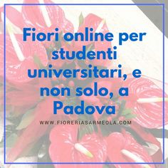 Fiori+online+per+studenti+universitari,+e+non+solo,+a+Padova