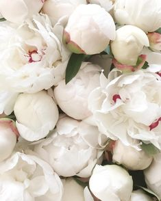 Peonies for days Piones Flowers, Flowers Nature, White Flowers, Planting Flowers, Beautiful Flowers, Wedding Flowers, White Peonies Bouquet, Bloom Baby, Flower Arrangements