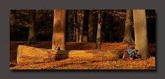 Afbeeldingsresultaat voor Herfstkleuren voor een abstract schilderij