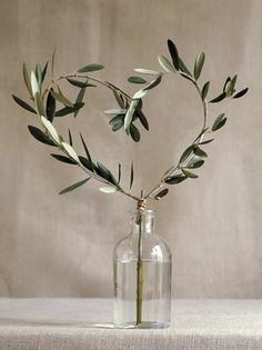 symbolizing love & peace ~ heart shaped olive tree branch