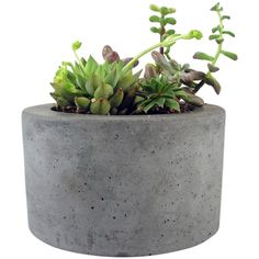 Roughfusion Round Concrete Planter (45 CAD) ❤ liked on Polyvore featuring fillers, plants, home, other and decor