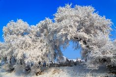 Winter Scenery @ Wusong Island, Jilin China by Feng Wei