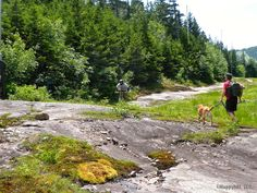 Exploring the dog-friendly Maine summer side of Sunday River Mountain Resort - mainetoday