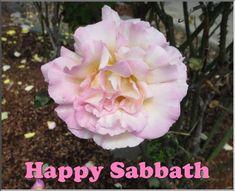 Psalm 106, Proverbs 30, Revelation 4, God 7, Happy Sabbath, Everlasting Life, Light Of Life, Gods Promises, Jesus Saves