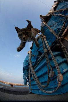 Photographer Fubirai has spent the last five years documenting the lives of the semi-wild cats that roam the island in Fukuoka, Japan. The cats are fed by local fishermen and wander freely through the streets, boatyards, porches, and houses of the city.