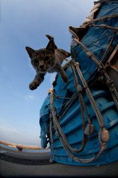 ♥ Photographer Fubirai spent 5 years photographing the cats of Fukuoka, Japan.