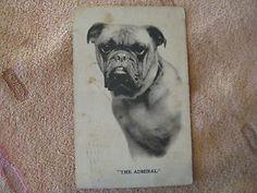 The Admiral Bull Dog Postcard Used Vintage 1911 Postmark