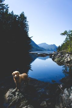 a dog and a lake - two of the most perfect things in creation