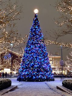 A very large Christmas tree stands so tall! Mainly covered in dark blue Christmas lights. Clear lights light up in the background. Christmas Scenes, Noel Christmas, Outdoor Christmas, Christmas Photos, Winter Christmas, Winter Snow, Christmas Tumblr, Christmas Displays, Christmas Mantles