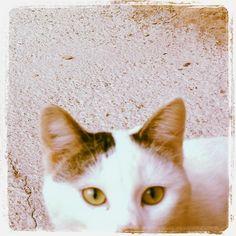 "I added ""batasigualada.cat: Miércoles Mudo - Hola!"" to an #inlinkz linkup!http://batasigualada.blogspot.com.es/2014/12/miercoles-mudo-hola_17.html"