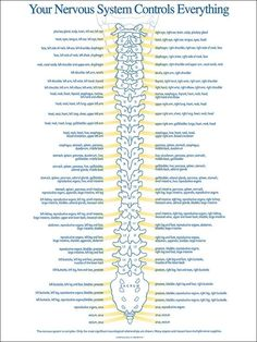 Nervous System- if ppl only knew, this is the cure for the future!!!! Educate yourself and you can do wonders 3