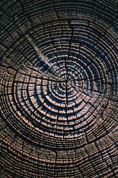 Tree Rings. Mesmerizing pattern