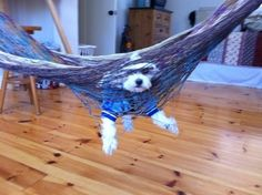 This dog who decided a nice afternoon on the hammock would be the perfect treat. | 28 Dogs That Immediately Regret Their Decisions