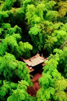 Amazing Snaps: Hidden Temple, Japan | See more