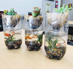Want to try hands-on gardening in your classroom? Check out these classroom gardening ideas for great project-based learning and science experiments. Science For Kids, Science Activities, Life Science, Ecosystem Activities, Science Experiments, Science Ideas, Science Lessons, Ecosystem In A Bottle, Kreative Jobs