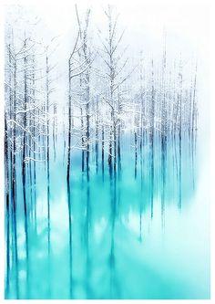 Reflected Forest, Giclée print from digital image by Neil Hemsley | Artfinder