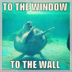 To the window, to the wall.......