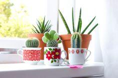 Plantas em canecas! Plants in a mug.