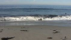 ♥♥ Relaxing 3 Hour Video of California Ocean Waves - Can almost feel the water come up to your feet, the sand disappearing from under your toes, - be sure to step over the seaweed! Love this! Look at the grunion running!!! jk