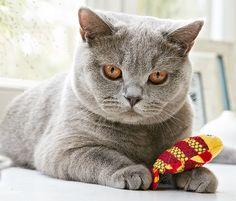 Das gebe ich nicht mehr her: #Katzen-Zahnpflege-Spielzeug für €5,95 bei #Tchibo