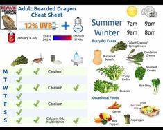 Bearded Dragon Funny, Bearded Dragon Habitat, Bearded Dragon Diet, Bearded Dragon Care Sheet, Bearded Dragon Cage Ideas, Bearded Dragon Costumes, Bearded Dragon Feeding, Bearded Dragon Tank Setup, Bearded Dragon Lighting