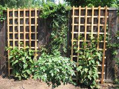 plants along a fence - Google Search