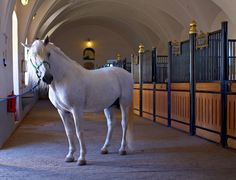 Lipica in Slovenia is the oldest European stud farm continuously breeding one of the oldest cultural horse breeds.