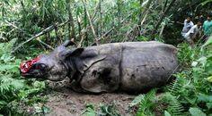 Handlen med truede dyr skal stoppes
