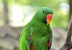 19-Aug-2015 10:56 - PAPEGAAI GEARRESTEERD NA UITSCHELDEN VROUW. Een Indiase papegaai is dinsdag door de politie gearresteerd omdat hij een 85-jarige oude vrouw zou hebben uitgescholden. Volgens Janabai…...