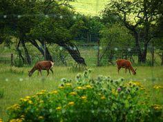 GARDEN: Deer Fence