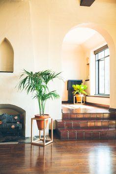 The Cube Frame Planter is an indoor planter by Trey Jones Studio