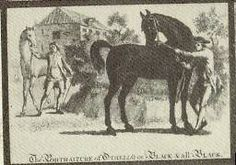 Portmores Othello(1743)(Colt) Crab- Miss Slamerkin By Young True Blue. 4x4 To Bylerly Turk. Sire Of Creeping Polly Who Was Dam Of King Fergus And Started A Line Known For Its Distance Abilities.