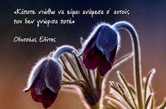 Οδυσσέας Ελύτης Word Out, Greek Quotes, Food For Thought, Strong Women, Picture Quotes, Wise Words, Illusions, Poetry, Notes
