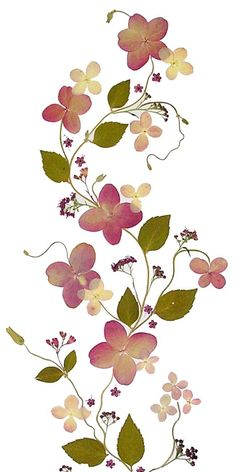 ... Pressing Flowers on Pinterest | Dried Flowers, Pressing Flowers and