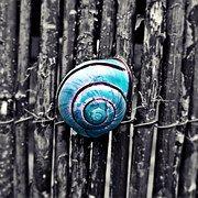 Schnecke, Schneckenhaus - Kostenlose Bilder auf Pixabay