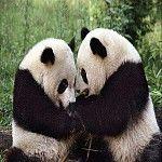khu bảo tồn thiên nhiên quốc gia Ngọa Long http://fcvietnam.vn/lam-visa/khu-bao-ton-thien-nhien-quoc-gia--ngoa-long-n.html
