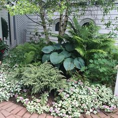 When you garden in shade, it's all about interesting foliage, contrasting textures and layering your plants. We love how the large blue hosta complements the finely textured ferns and flowering Pink Chablis lamium Ferns Garden, Shade Garden Plants, Garden Art, Cement Garden, Side Garden, Mosaic Garden, Garden Trees, Blue Hosta, Landscape Design