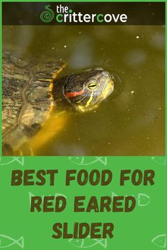 Different Types Of Turtles, Red Eared Slider Turtle, Turtle Care, Classroom Pets, Slider Recipes, Sliders, Knowledge, Nutrition, Foods
