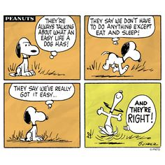 The life of a dog.
