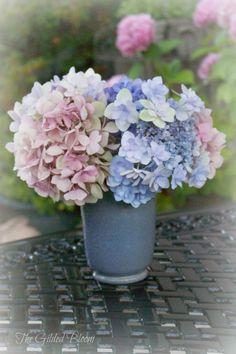 The Gilded Bloom: Summer Decorating: Seashells and Hydrangeas