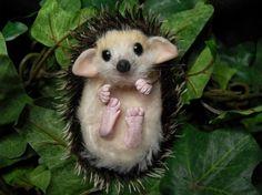 Minatures.........Baby Hedgehog