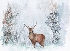 Stag in the snow www.illustrationbyjoo.com