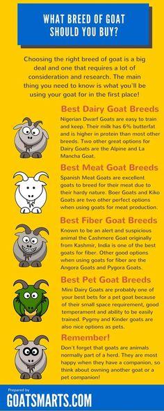 Goat tips