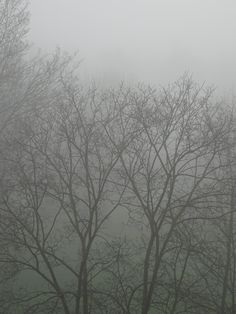 Fog - New Years Day 2016 - Utrecht
