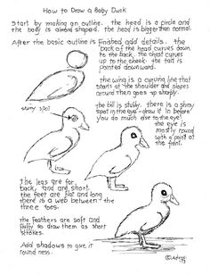 how to draw a baby duck printable worksheet