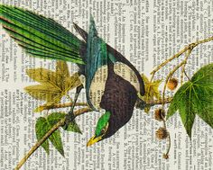 vintage magpie artwork  printed on page from old by FauxKiss