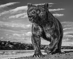 Astonishing images of wildlife that can help you raise your game |